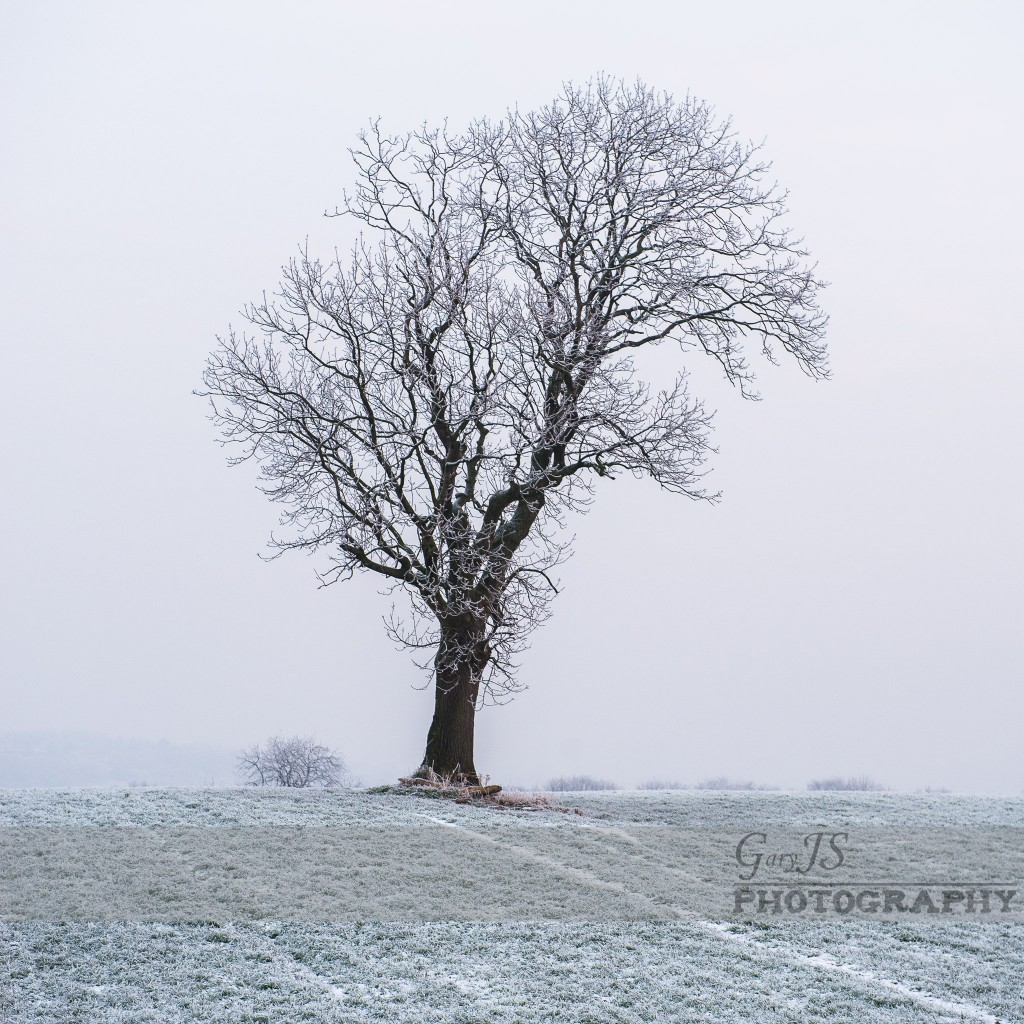 Lonely Tree (Farnley Tyas)