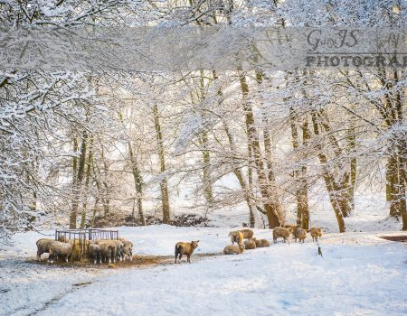 Holmfirth's Cold Snap